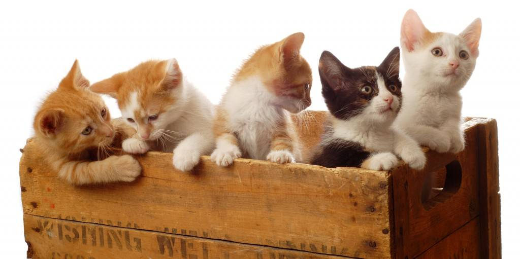Five Kittens In A Box