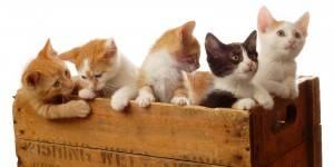 Entenda por que as gatas dão cria no verão