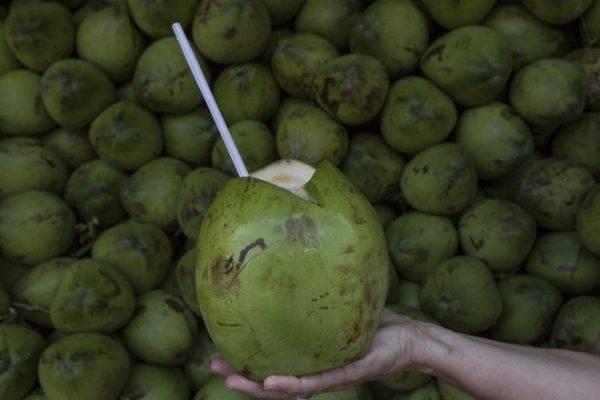 Na onda dos alimentos saudáveis, água de coco está se tornando um mercado bilionário