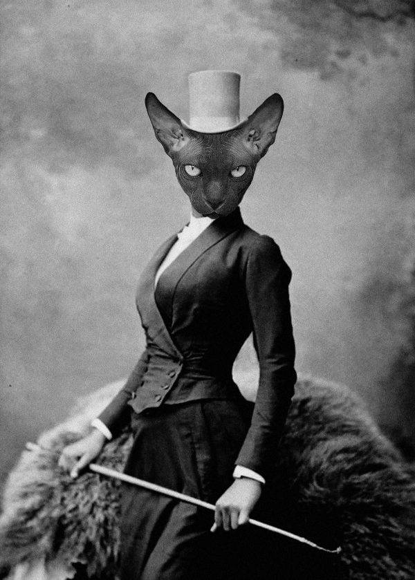 Amazon Cat Interferência digital sobre a fotografia de 1891, da amazona  circense Selika Lazevski , atribuída a Felix Nadar. Charly Techio