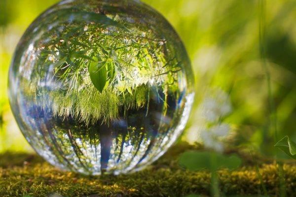 OSCIP: titulação que ainda interessa às organizações de defesa do meio ambiente