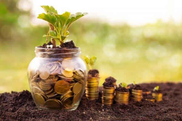 Possibilidade de conversão das multas ambientais em serviços de preservação, melhoria e recuperação do meio ambiente