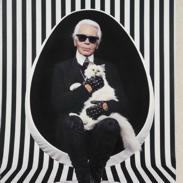 A gatinha Choupette ficou com uma parte da herança de Karl Lagerfeld. (crédito: reprodução).