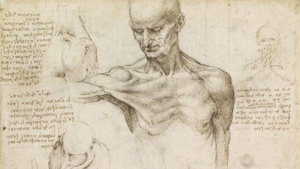 Acredite, Leonardo da Vinci teve muito menos problemas para aprender sobre o corpo humano do que as lendas dizem por aí. (Imagem: Wikimedia Commons)