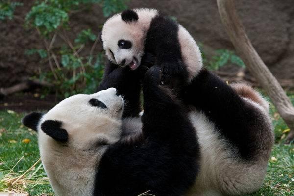 Foto: San Diego Zoo